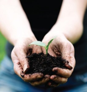 Close-up of hands cupping black soil with a young green plant with two leaves growing from it.