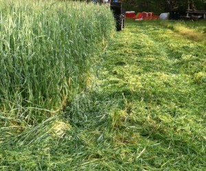 COVER CROP remaining-cover-crop-residue-meres-garden
