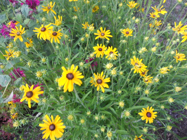 Ask Ruth: Finding Neonicotinoid-Free Plants for Pollinator Gardens
