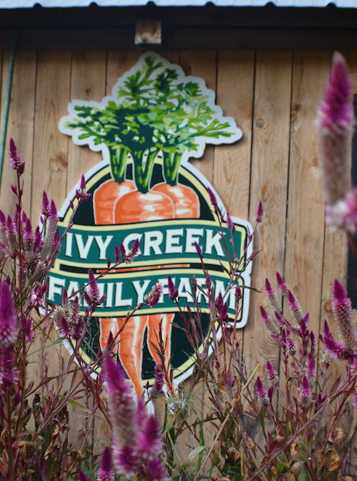 CRAFT TOUR: Ivy Creek Family Farm