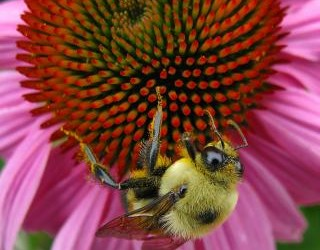 Ask Ruth: Keeping the Pollinators & the Neighbors Happy