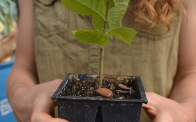 Ask Ruth: Is There an Organic Miracle Grow?