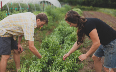 Survey findings may help stem the loss of farms in WNC