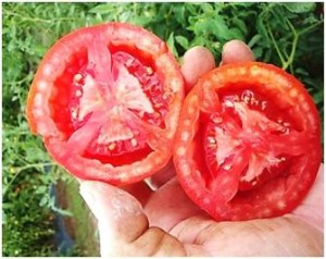 Ask Tom: Heat and Triangular Tomatoes