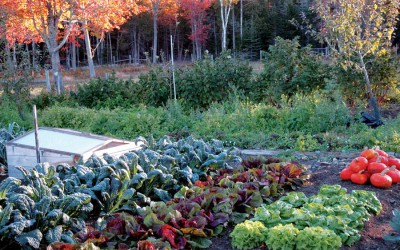 Ask Ruth: Things to do in the Fall