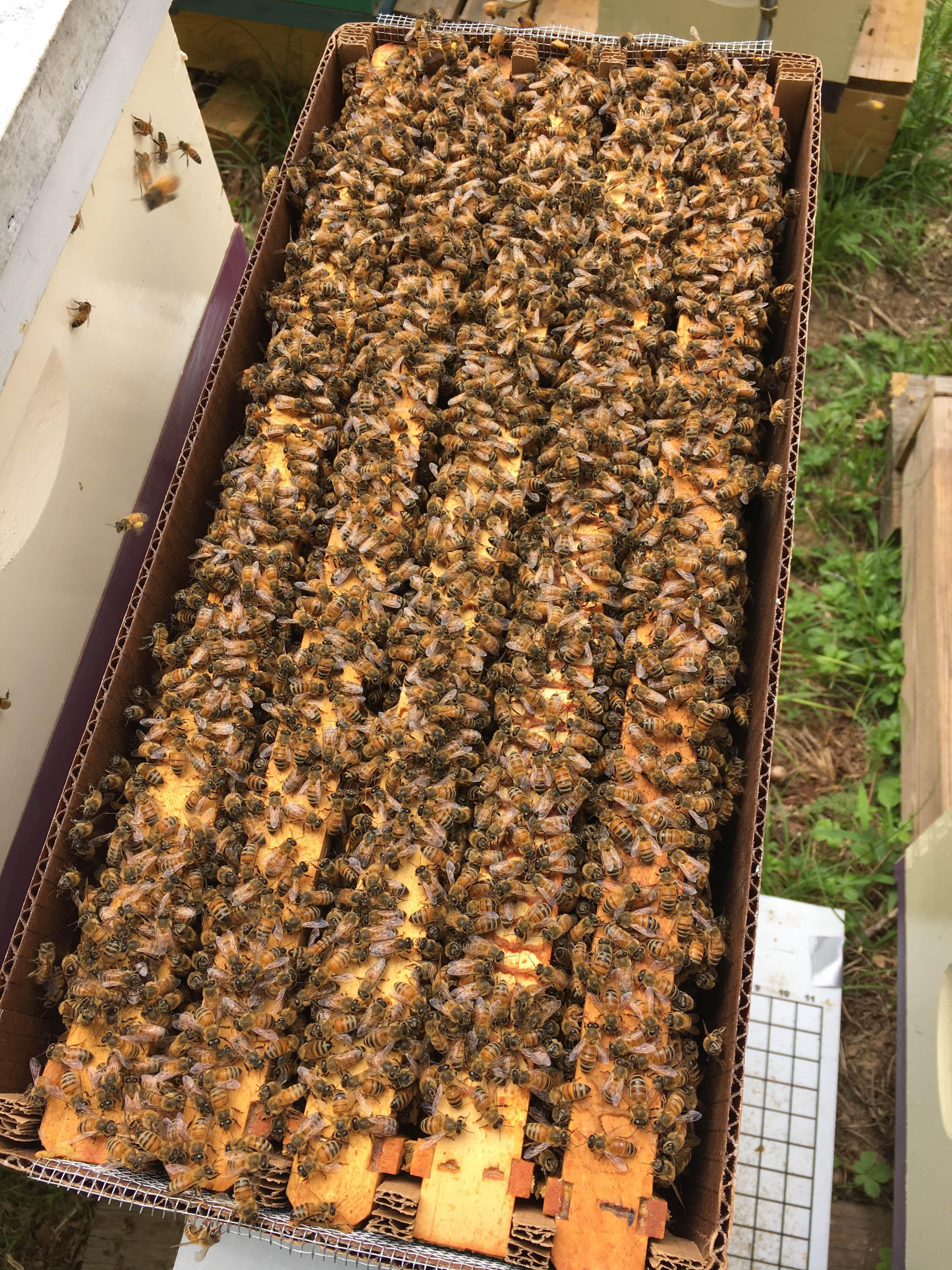 Growing nuc hives for new beekeepers in Yancey County -  Leigh, Five Apple Farm