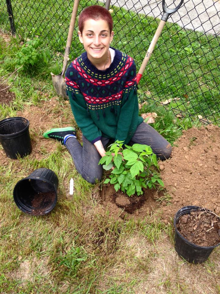 A Southside Garden Volunteer at an edible tree/shrub planting day