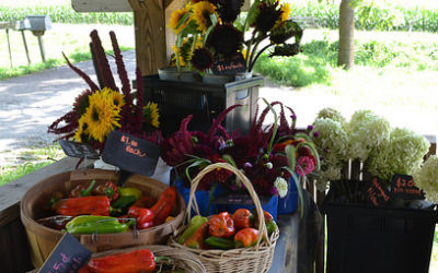 WNC CRAFT Farm Tour – Flying Cloud Farm – Berries Through the Seasons