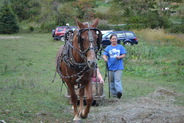 WNC CRAFT – Doubletree Farm – Sorghum Syrup & Draft Horses
