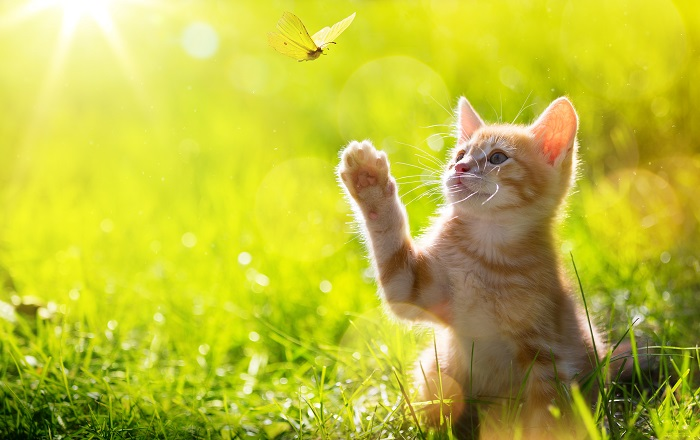 Is Your Lawn a Danger to Your Cat?