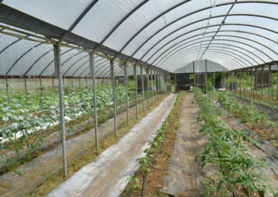 Greenhouse at Living Web Farms
