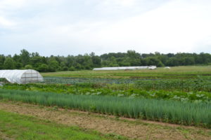 Vegetable Production at Bluebird