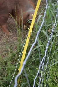 Fence for the sows