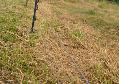 Single wire fence for met pigs on pasture.