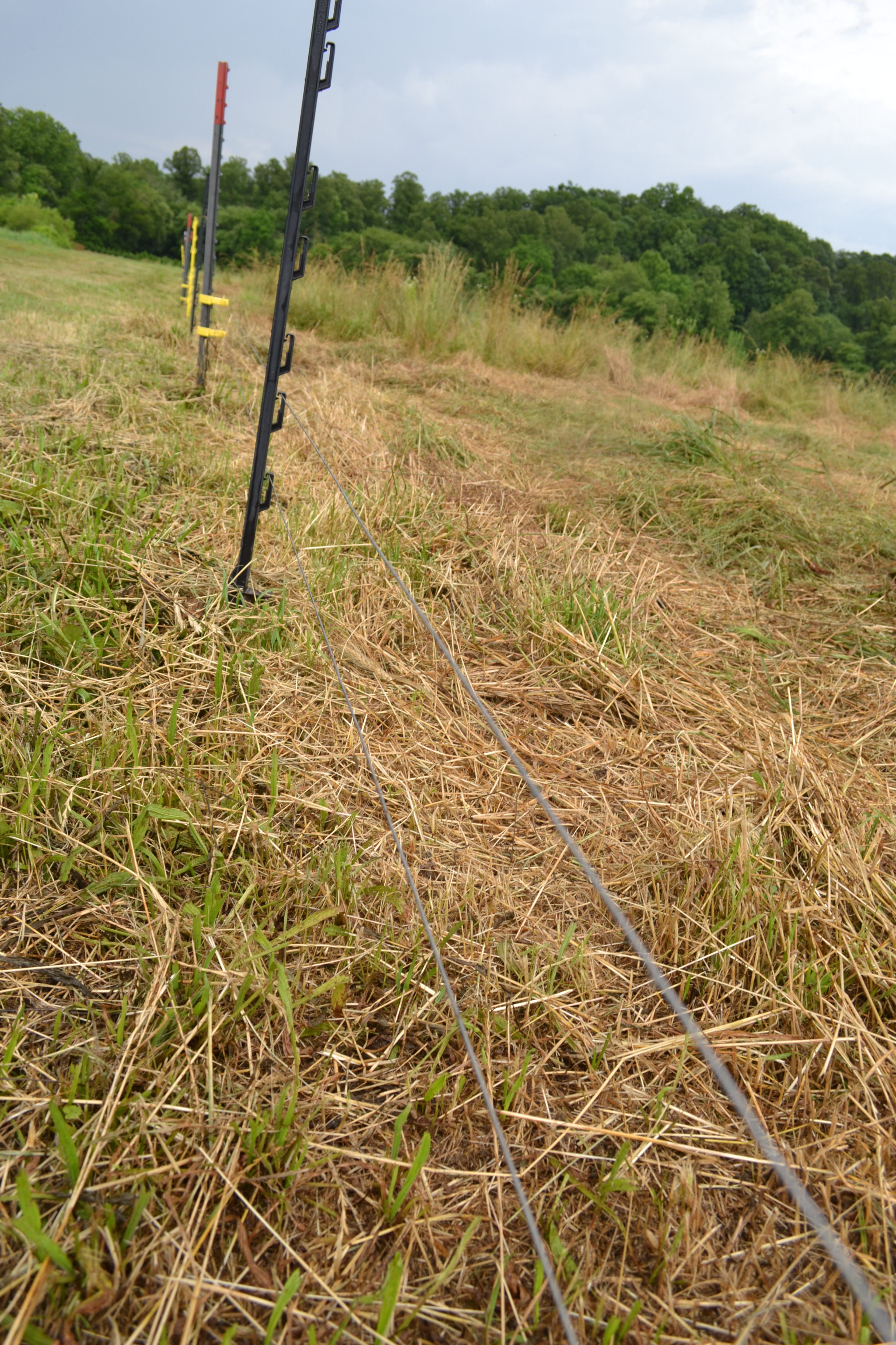 Single wire fence for met pigs on pasture. |
