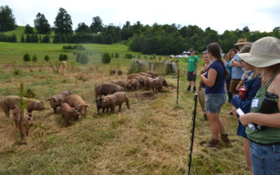 WNC CRAFT Farm Tour: Farrowing & Year-Round Hog Production with Bluebird Farm