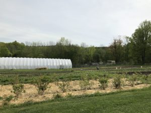 View of Soul Fire Farm rows of vegetables and high tunnel.