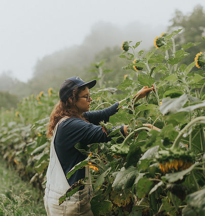 Apprentice Link helps aspiring farmers gain on-the ground experience in WNC