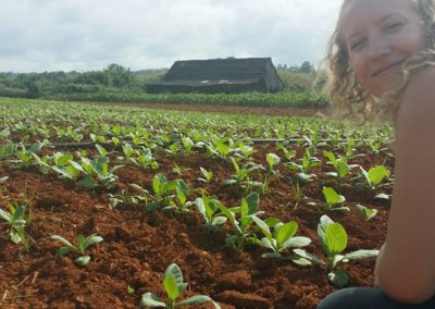 Sera among the tobacco, happy to be back in Cuba!
