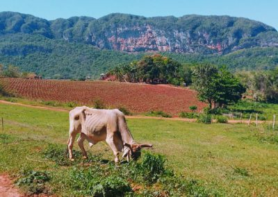 Hiking through Vinales Valley