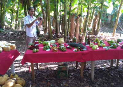 Learning to identify all of the tropical fruits!
