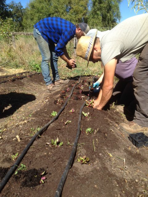WNC Farmers Visit California to Learn About No-Till Farming Methods