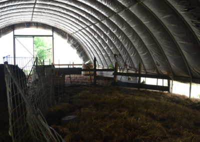 Farrowing High Tunnel