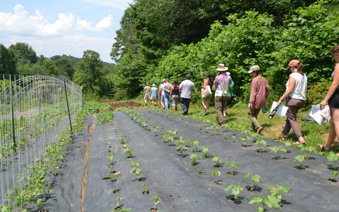 WNC CRAFT Tour of Thatchmore Farm—Small, Diversified, and Mountainous