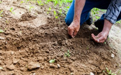 Why Gardening Should Be Your New Retirement Hobby