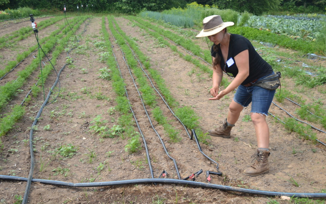 Irrigating Vegetables & Livestock at Bluebird Farm – WNC CRAFT