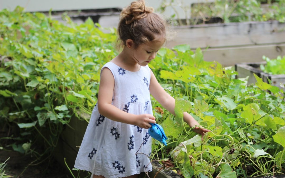 Why You Should Consider an Organic Garden in Your Early Education Environment