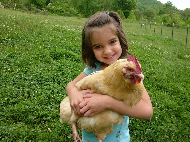 Buying Chickens in the Fall