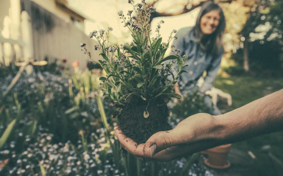 The Common Types of Garden Mold and What to Do About Them