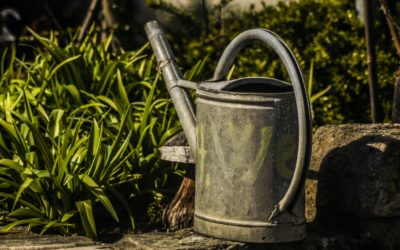 Eco-Friendly Ways To Water Your Organic Garden