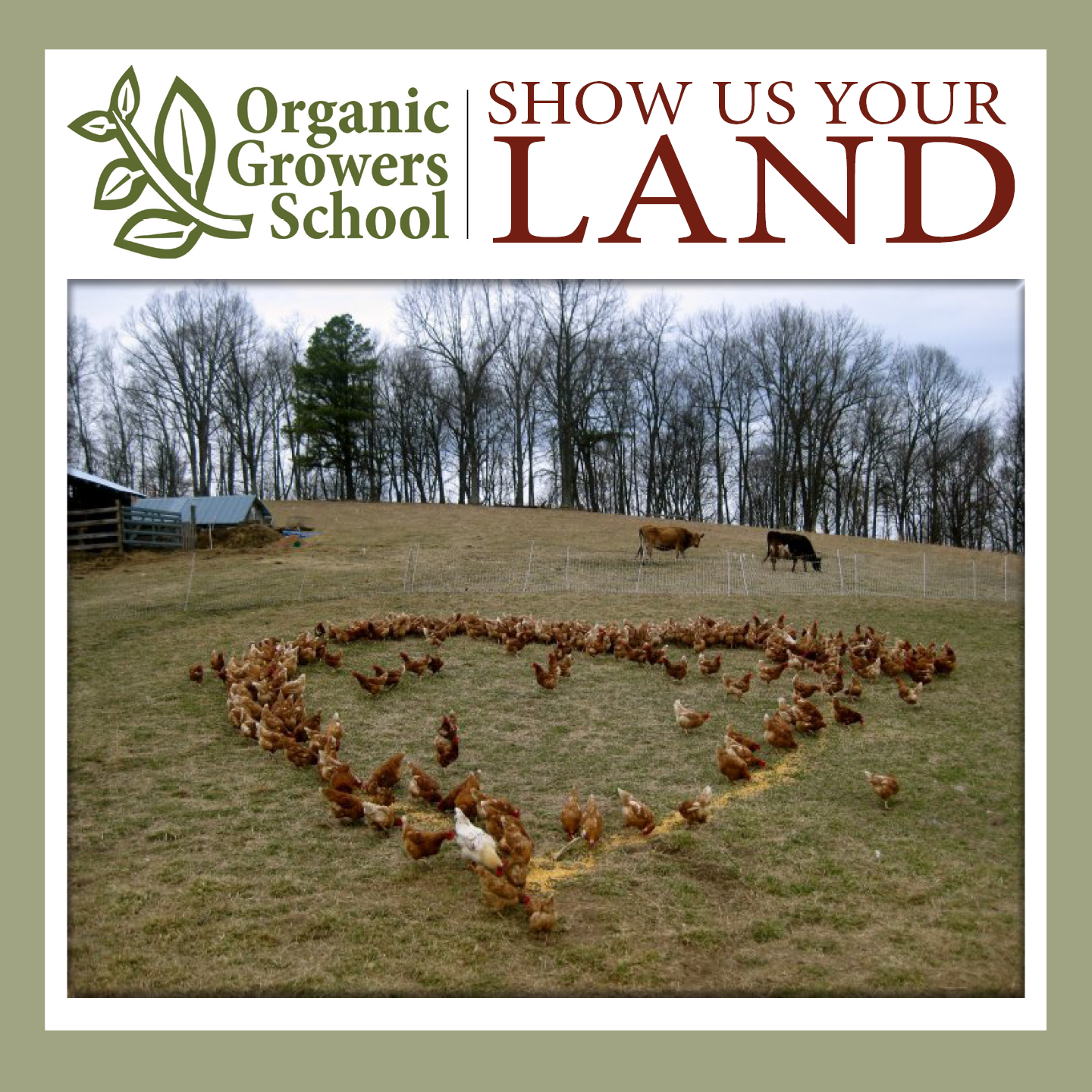 show us your land chickens