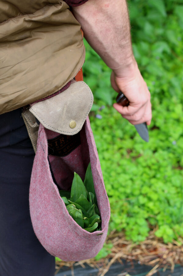 Foraging bag full of ramps without the roots and knife