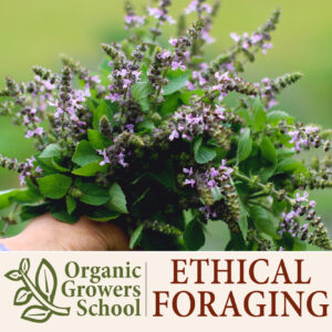Ethical Foraging